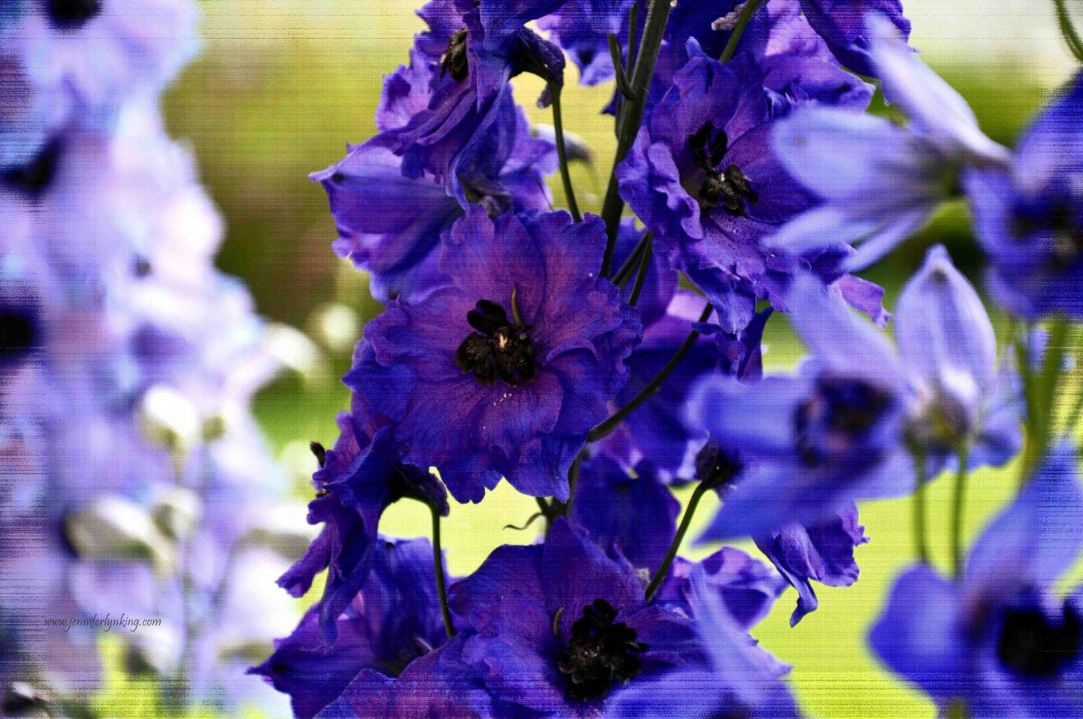 True Blue Delphinium