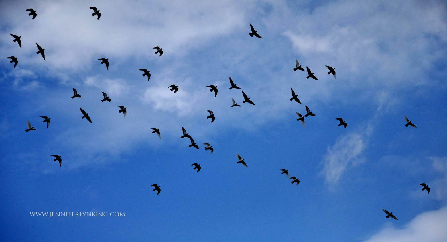 Passenger Pigeons against Blue Summer Sky: Prague
