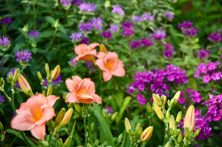 July gardens color palette