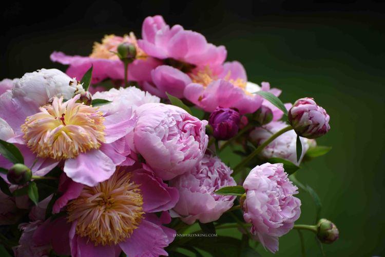Peonies from my garden