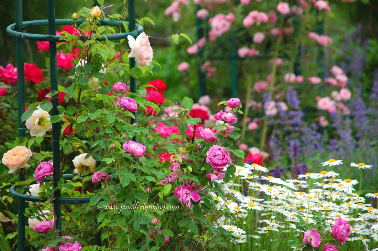 June Rose Gardens