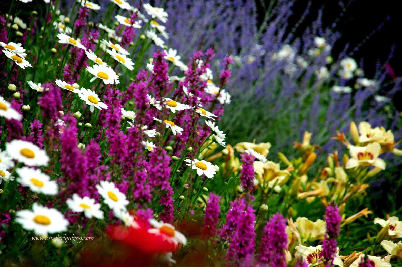 my former USA backyard gardens, colorful bliss