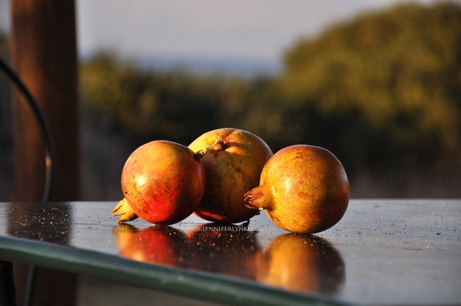 Pomegranates from the trees where we stayed in the Maremma, Italy